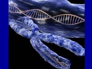 adn-cromosoma